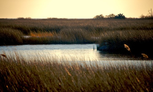 (Chesapeake Bay Program)