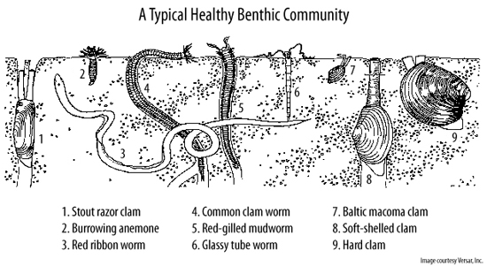 A typical healthy benthic community