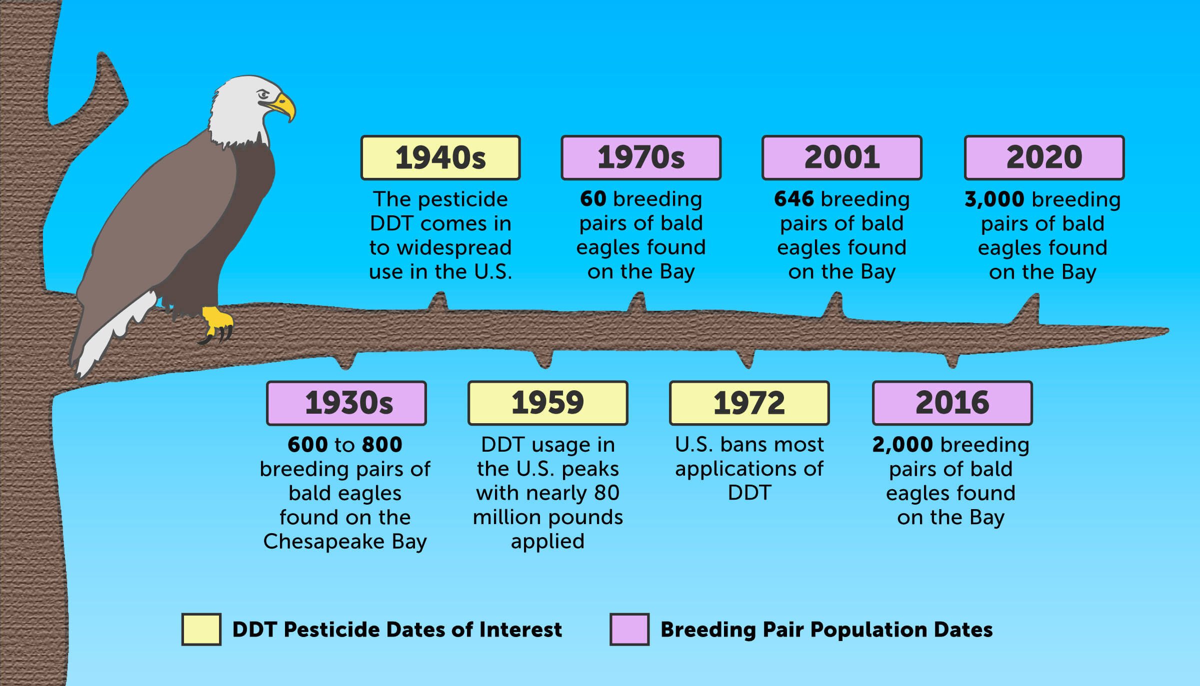 Historical timeline illustrating the recovery of the Bay's bald eagle population after a 1972 ban on the pesticide DDT