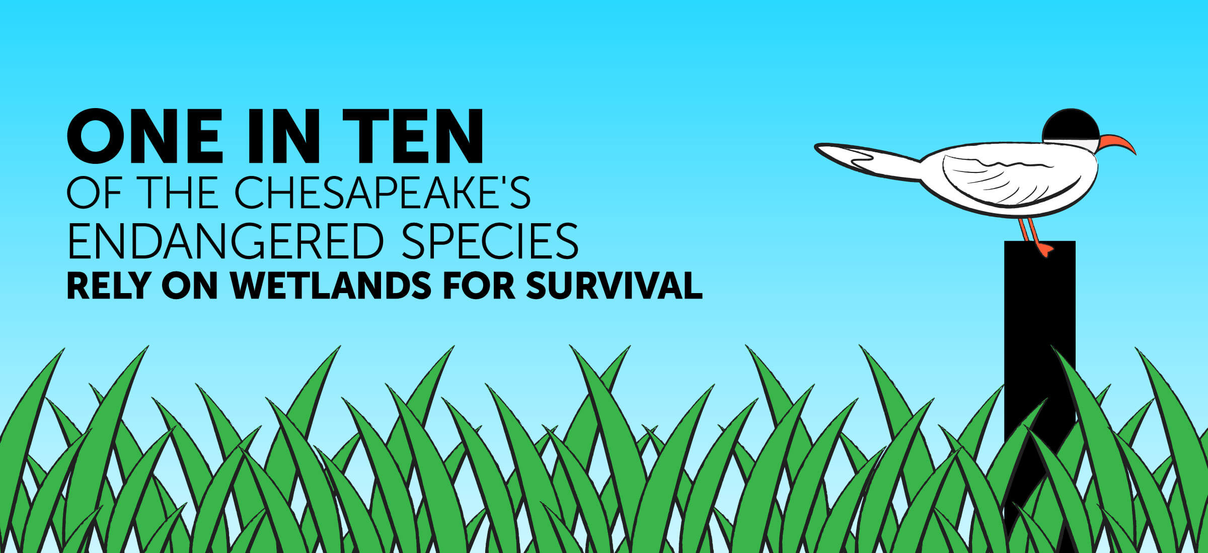 One in ten of the Chesapeake's endangered species rely on wetlands for survival.