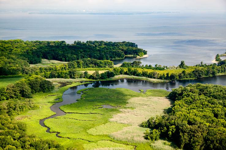 Dive into the unique habitat that is an estuary, where fresh water from rivers and streams mixes with salt water from the ocean.