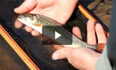 From the Field: Tagged brook trout reveal the pristine health of Maryland's Savage River