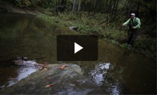 From the Field: Linking land and water in brook trout conservation