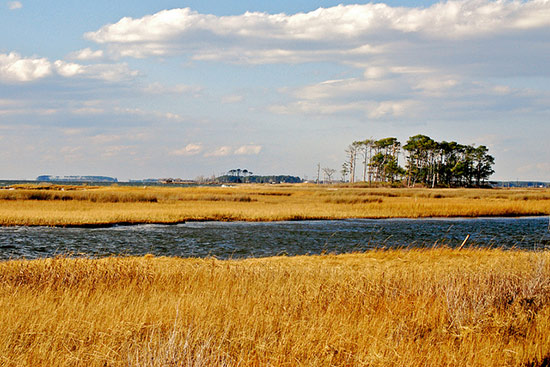 What degree would someone need to obtain to pursue a career in coastal restoration?