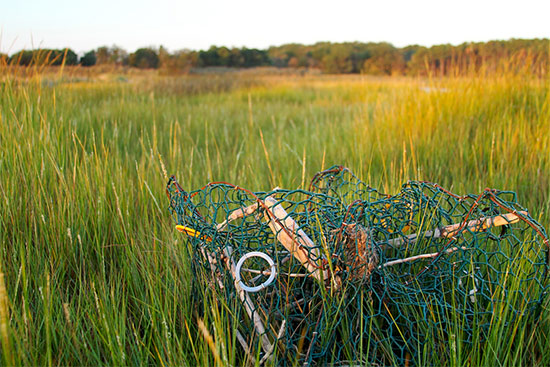 how to catch blue crabs with traps